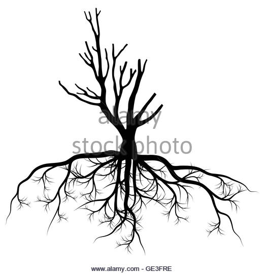 520x540 Tree Drawing With Roots Stock Photos Amp Tree Drawing With Roots