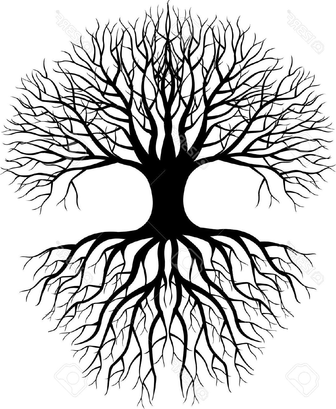 1068x1300 Tree Roots Clipart