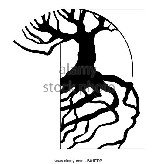 520x540 Tree Roots Stock Photos Amp Tree Roots Stock Images