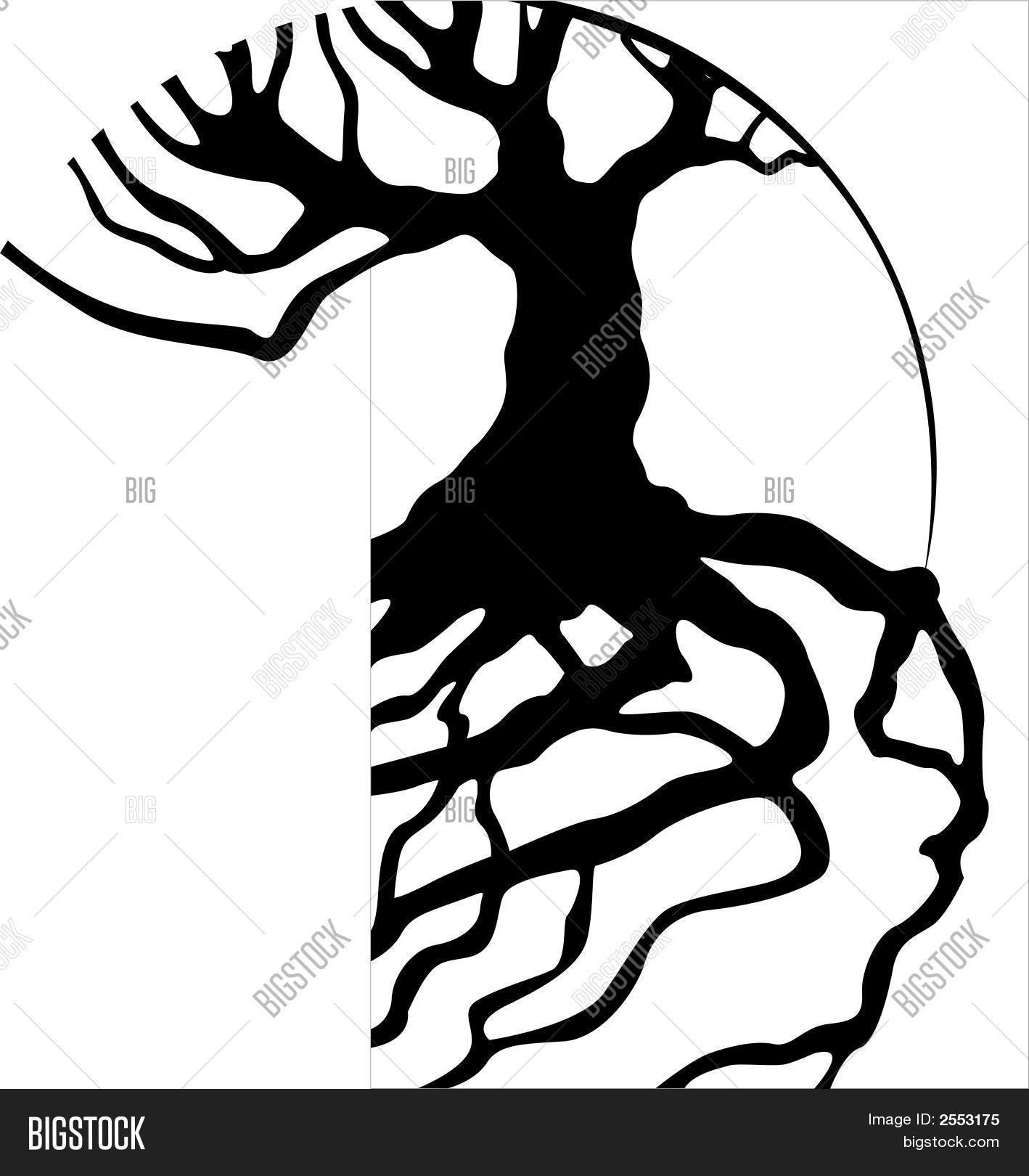 1418x1620 Tree Roots Vector Amp Photo Bigstock