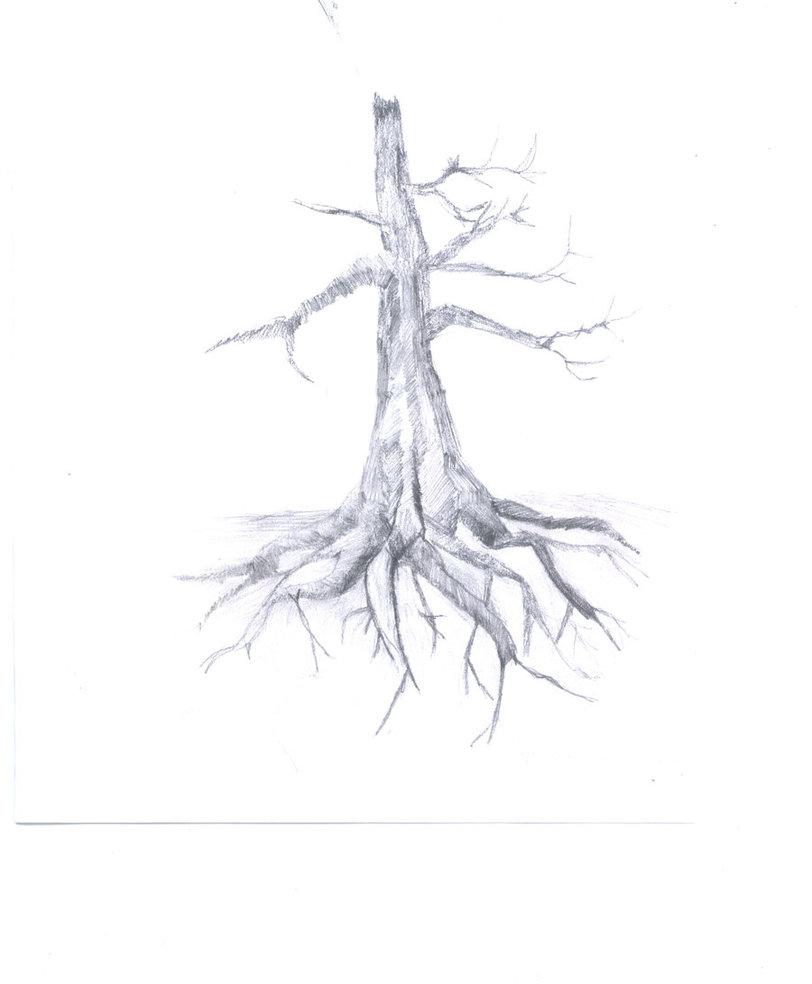 812x984 Tree Roots By Nakoanotenshi