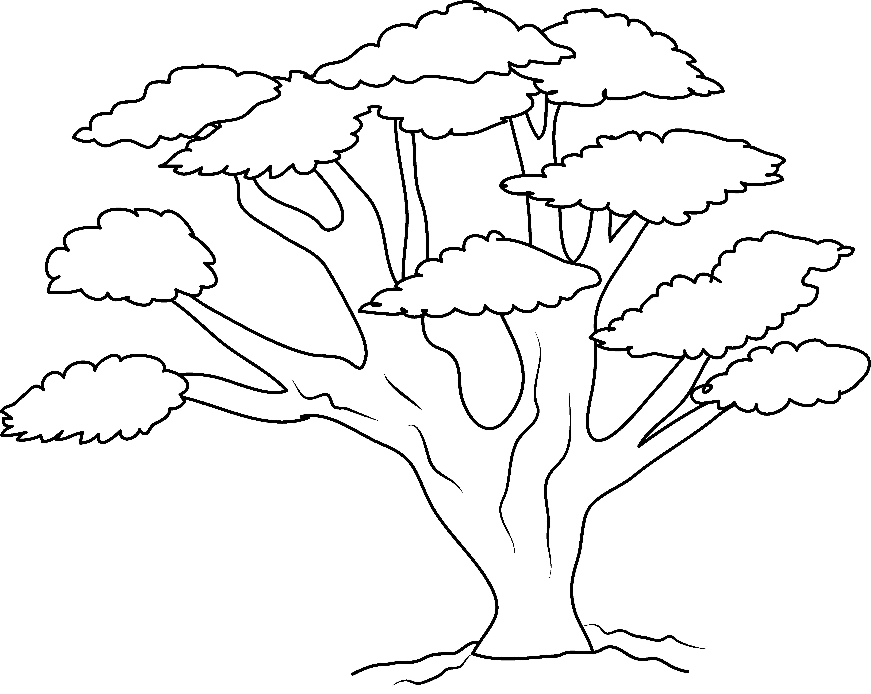 5870x4678 Clip Art Tree Line Drawing Clip Art