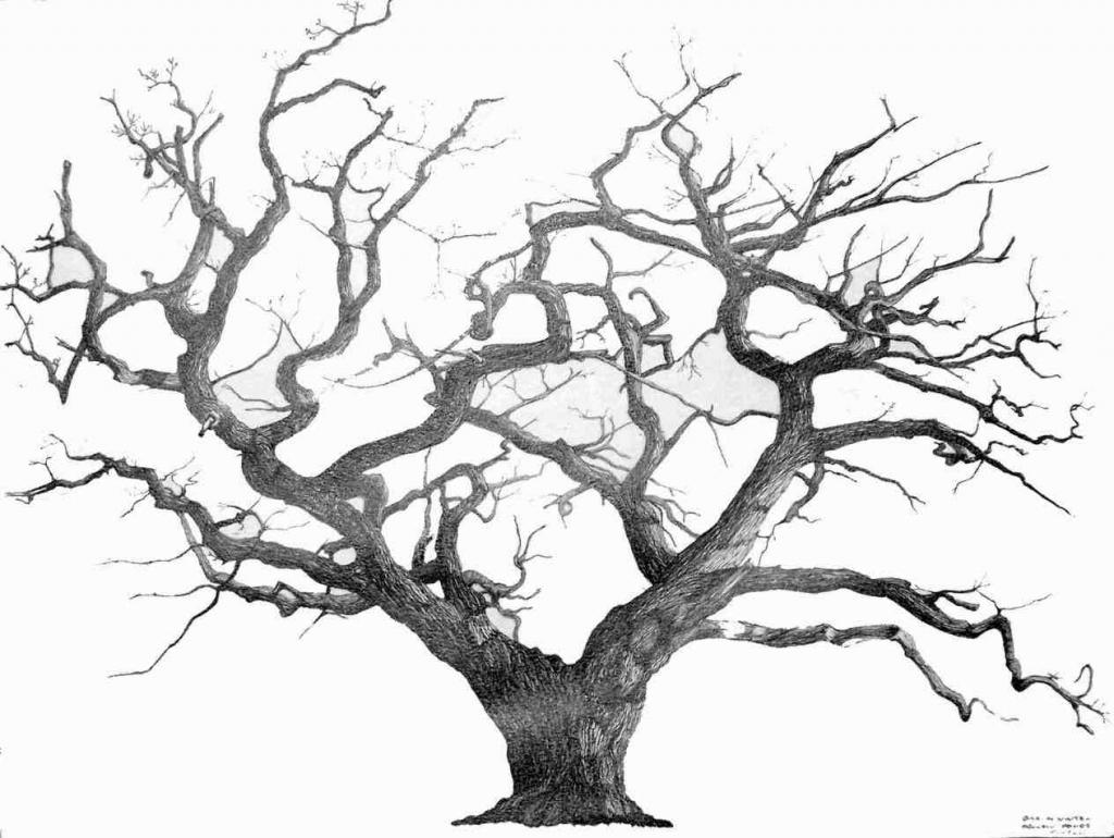 1024x770 Line Drawing Of A Tree Oak Tree Line Drawing Ngorongclub