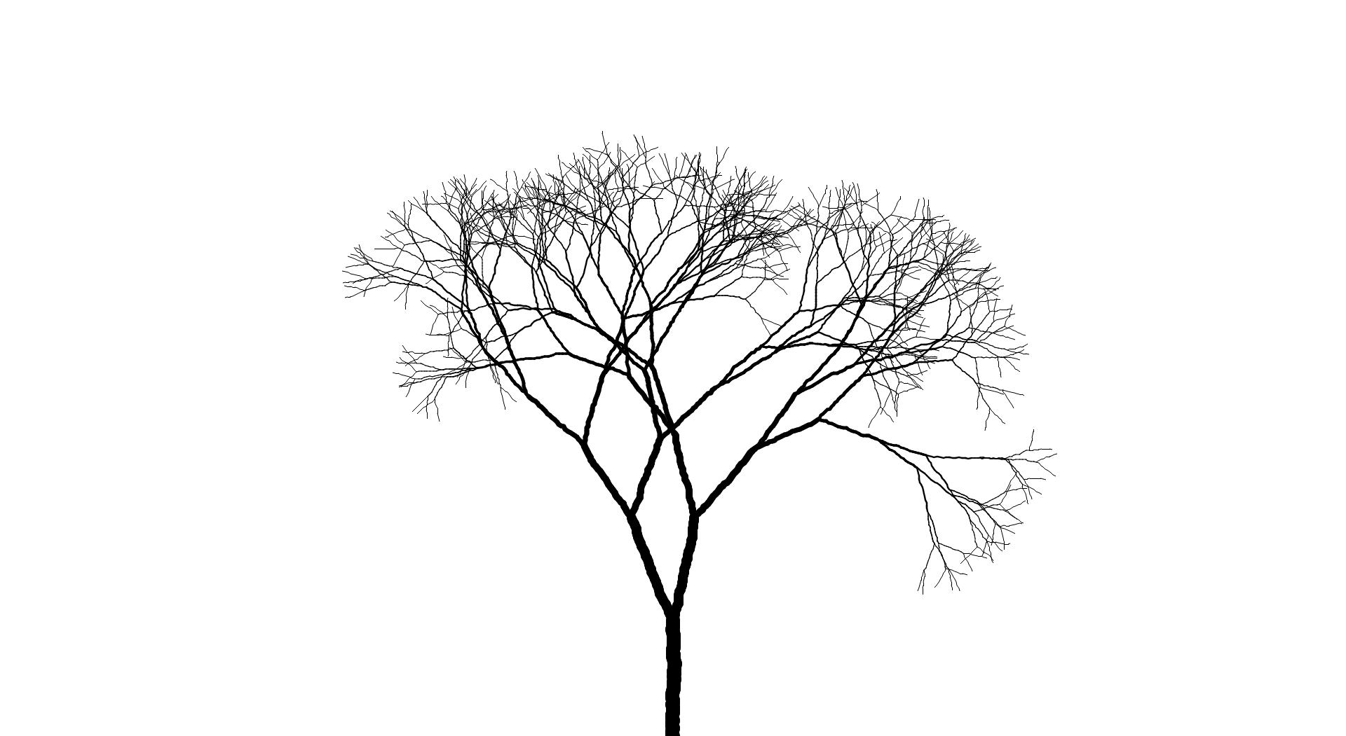1920x1051 Trees