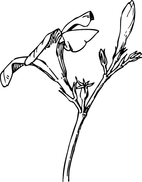 500x640 Black, Drawing, Plants, Tree, Flower, White, Flowers