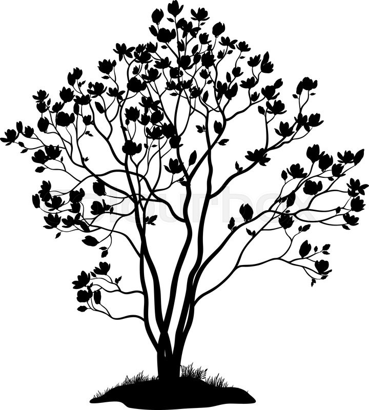 720x800 Spring Magnolia Tree With Flowers, Leaves And Grass Black