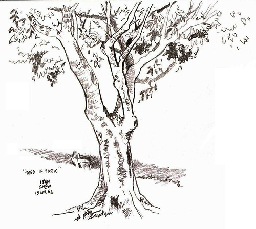 500x448 Tree Drawing Outline