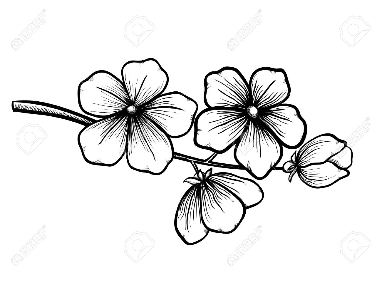 1300x1004 Branch Of A Blossoming Tree In Graphic Black White Style, Drawing