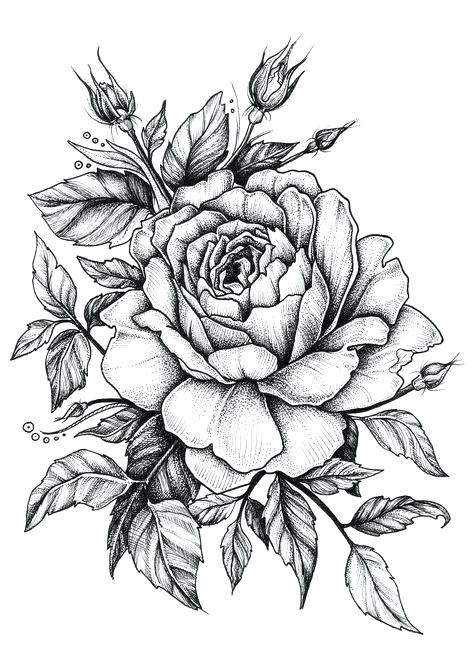 474x668 Drawings Pictures Roses Drawings Drawings Pictures Of Trees