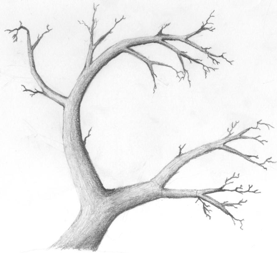 900x825 Drawn Branch Curved Tree