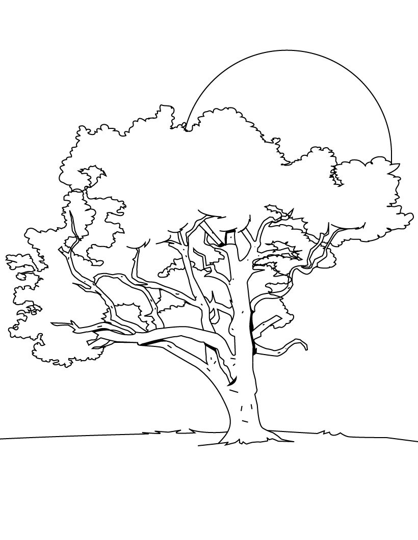 820x1060 Free Printable Tree Coloring Pages For Kids