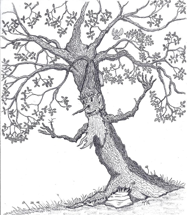 786x900 The Wierd Old Tree Drawing By Tony Nelson