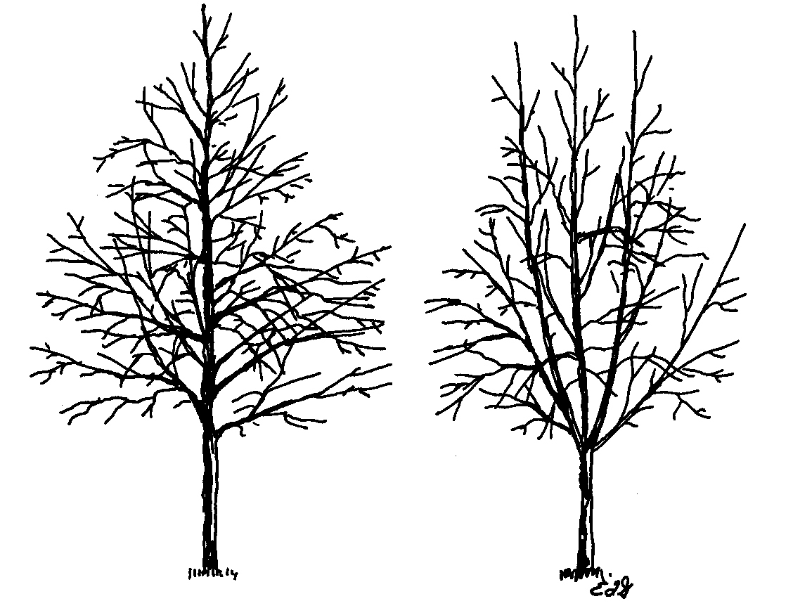 1128x872 Tree Small Drawing Small Drawings 2015, Trees Plants On Behance