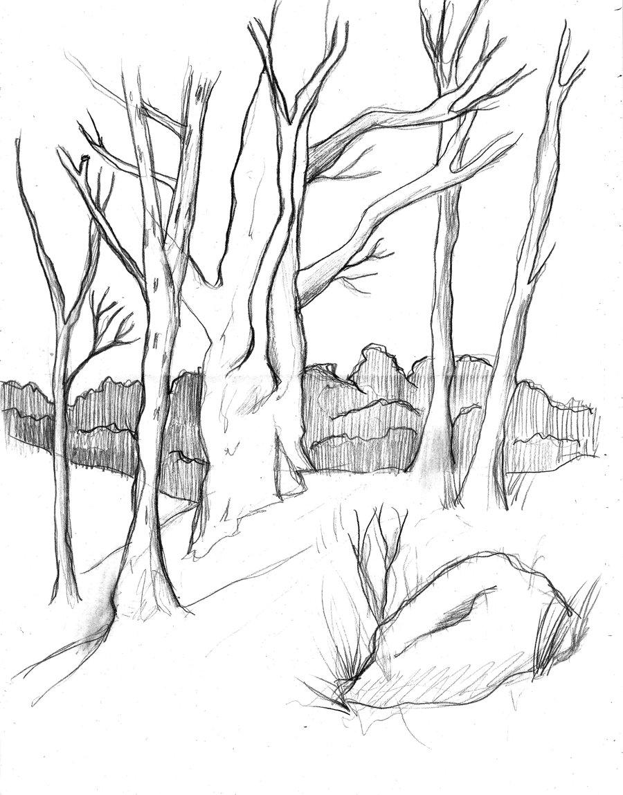 900x1149 Trees