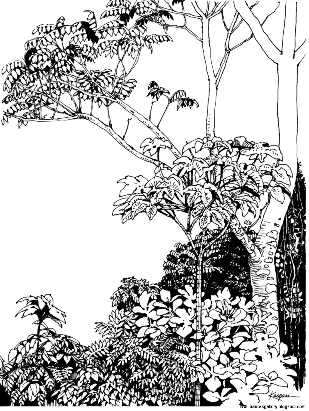 1082x1440 Tropical Rainforest Trees Drawing Wallpapers Gallery