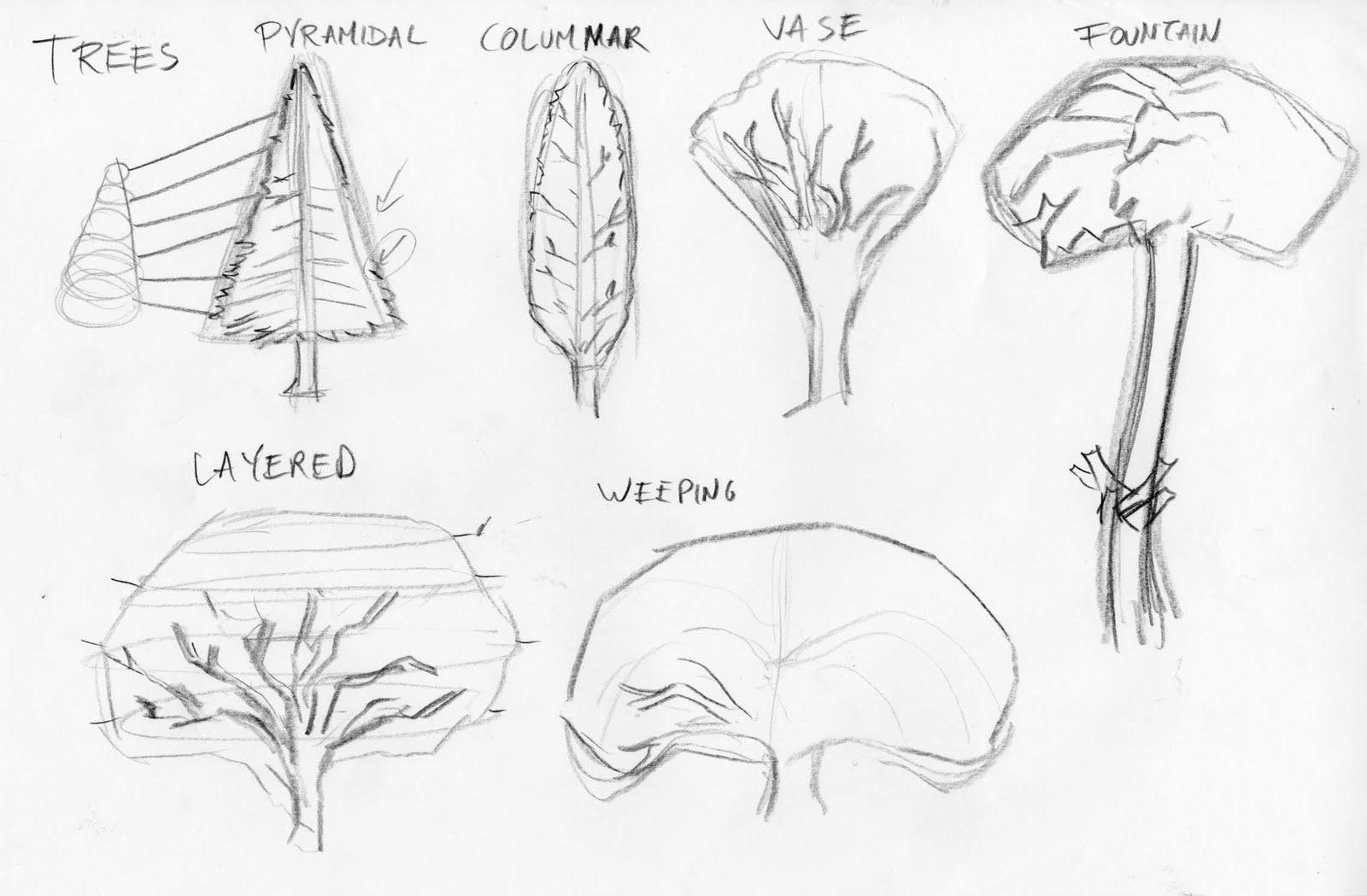 1600x1049 Imagetalker Dove. Drawing Trees!