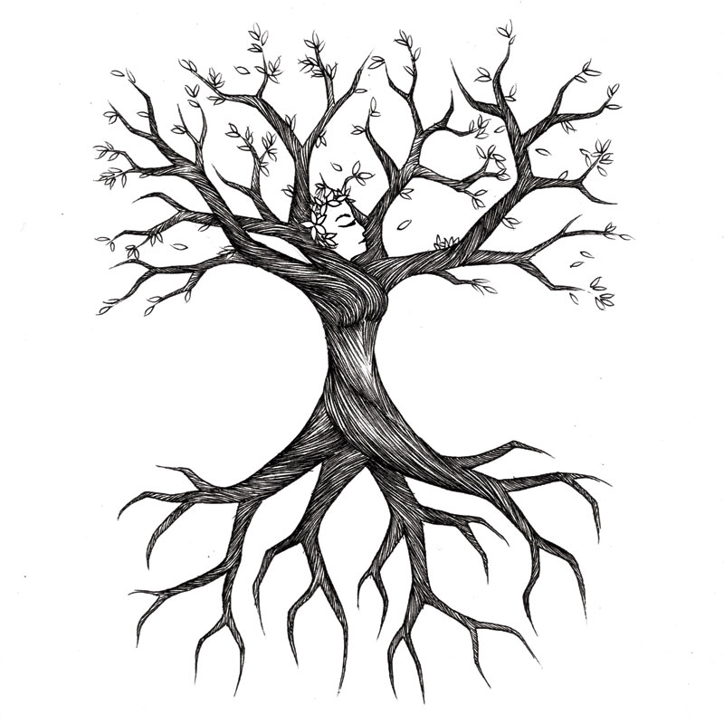 800x800 Clipart Tree Drawing Collection
