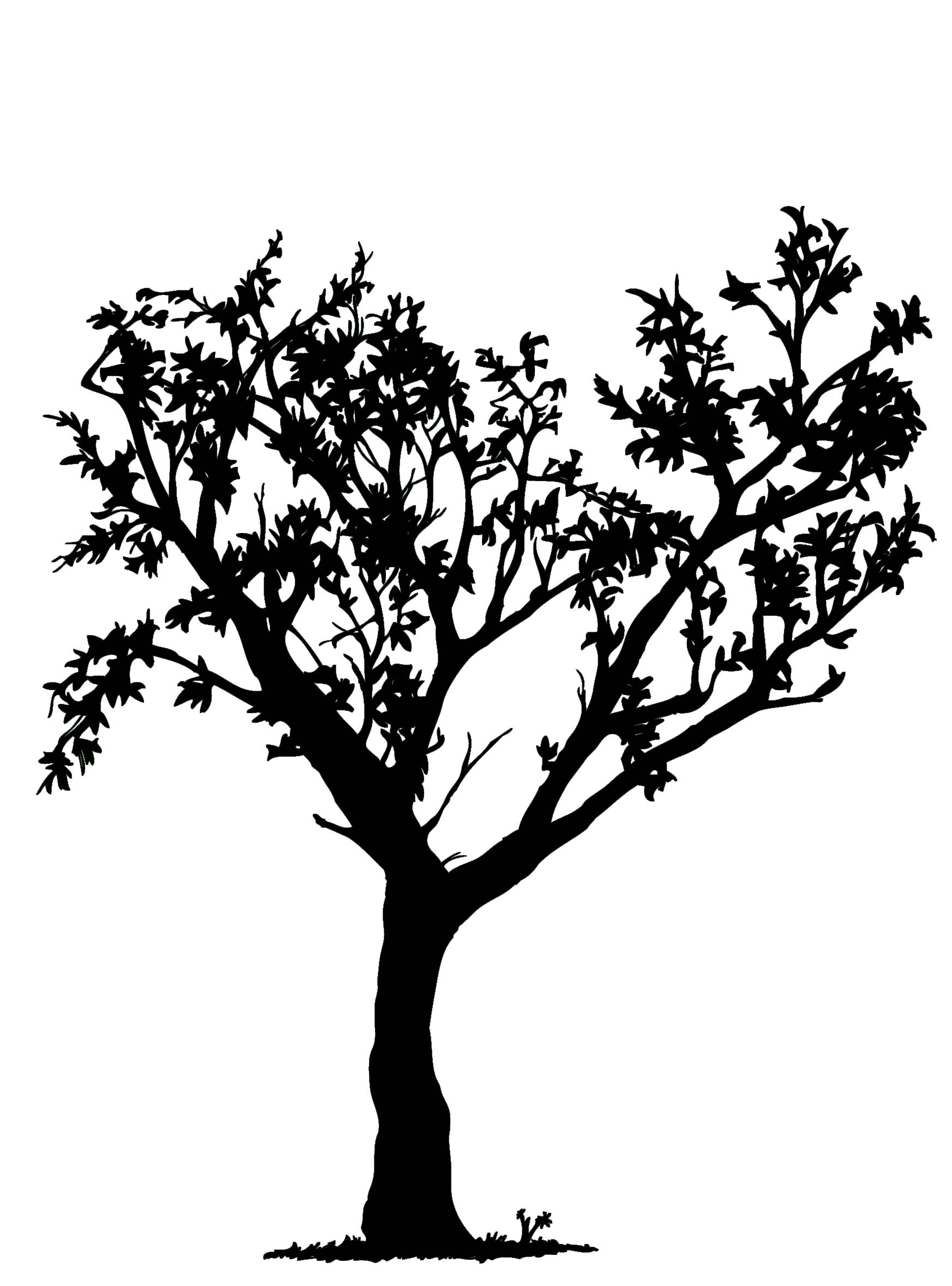 1744x2355 Tree Drawings Black And White Collection