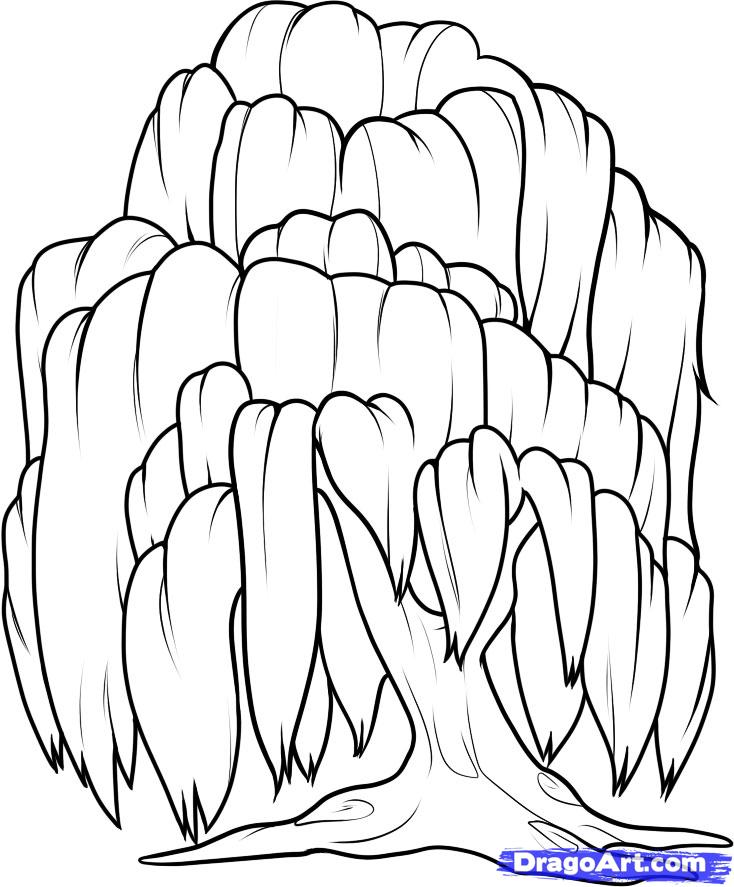 734x887 Weeping Willow Coloring Pages