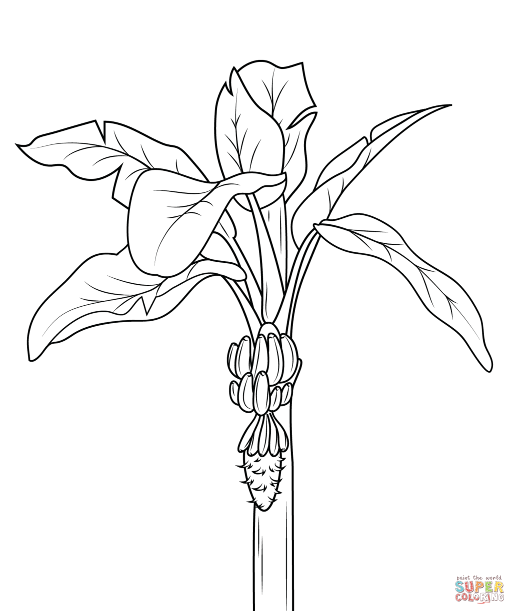 1024x1223 Coloring Page Banana Tree Kids Drawing And Coloring Pages