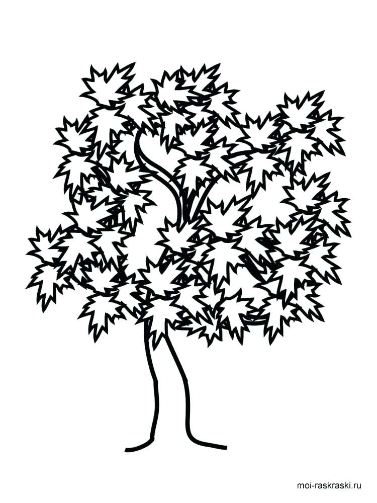 750x1000 Coloring Pages Of Trees Awesome Drawing Oak Tree Coloring Page