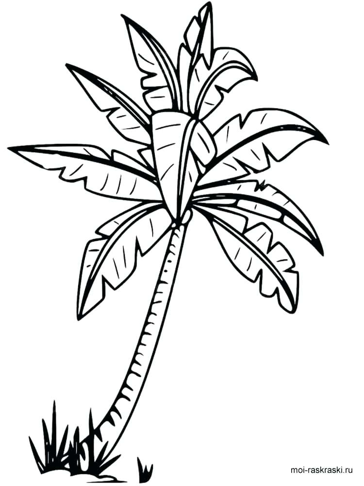 750x1000 Date Palm Tree Coloring Pages Best Inspiration Graphic Trees