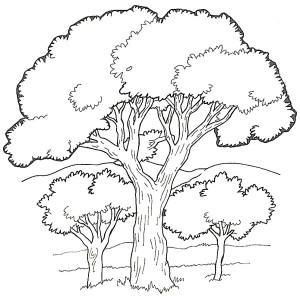 300x300 Drawing Of An Oak Tree Leaf And Fruit Coloring Page Color Luna