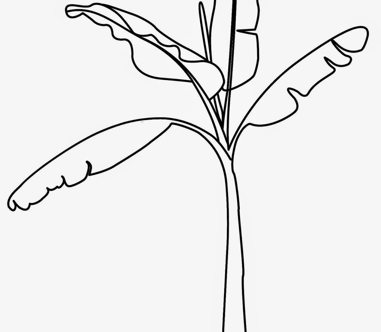 1240x1080 Printable Tree Coloring Pages Pictures Of Banana Trees To Download