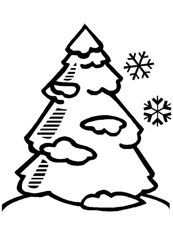 600x800 Winter Tree Coloring Page