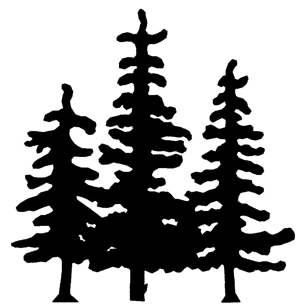 975x988 Drawn Pine Tree Line Drawing