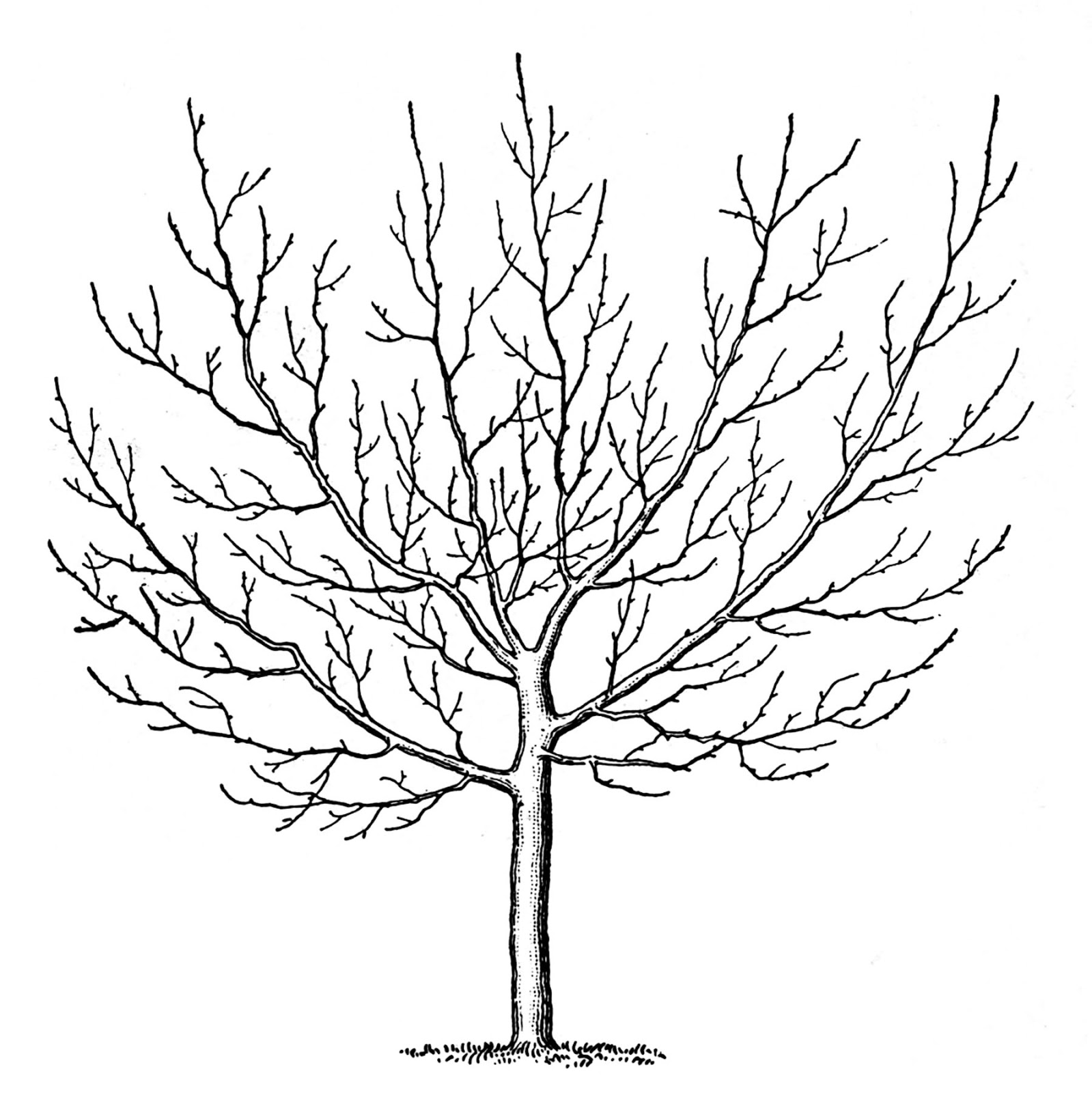 1599x1600 Free Clipart Line Drawing Tree