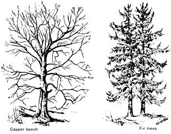 350x274 How To Draw Trees