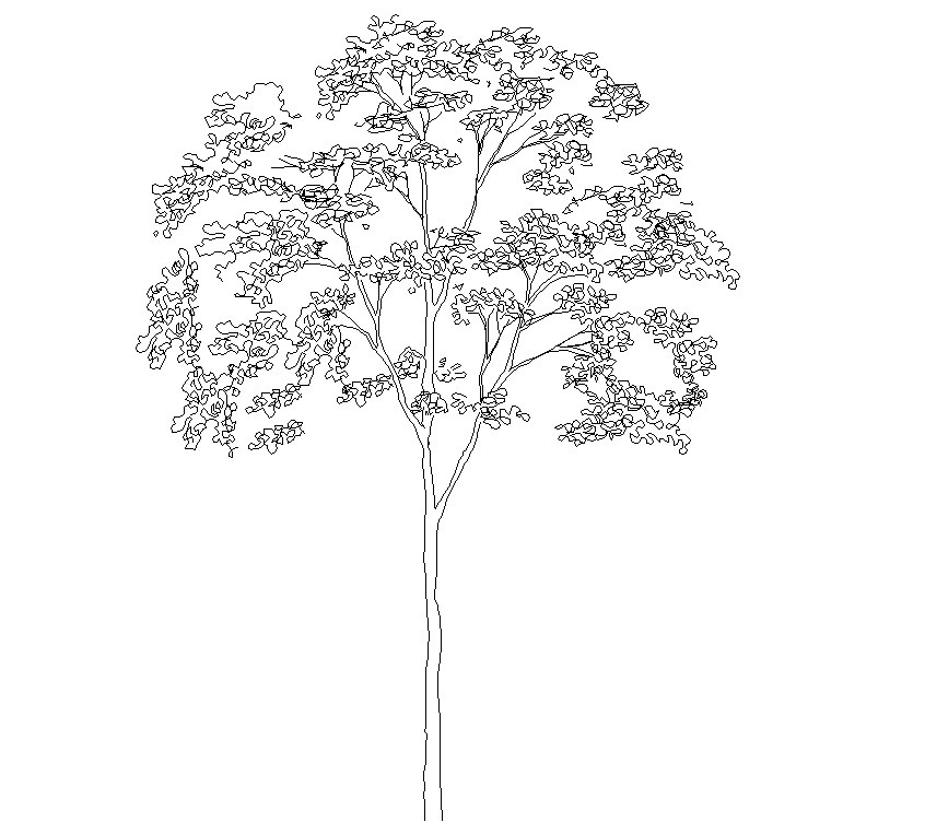 846x763 Tree Elevation Cad Symbol