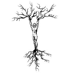 236x248 Pictures How To Draw Tree Roots,