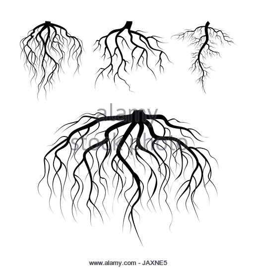 520x540 Roots Abstract Stock Vector Images