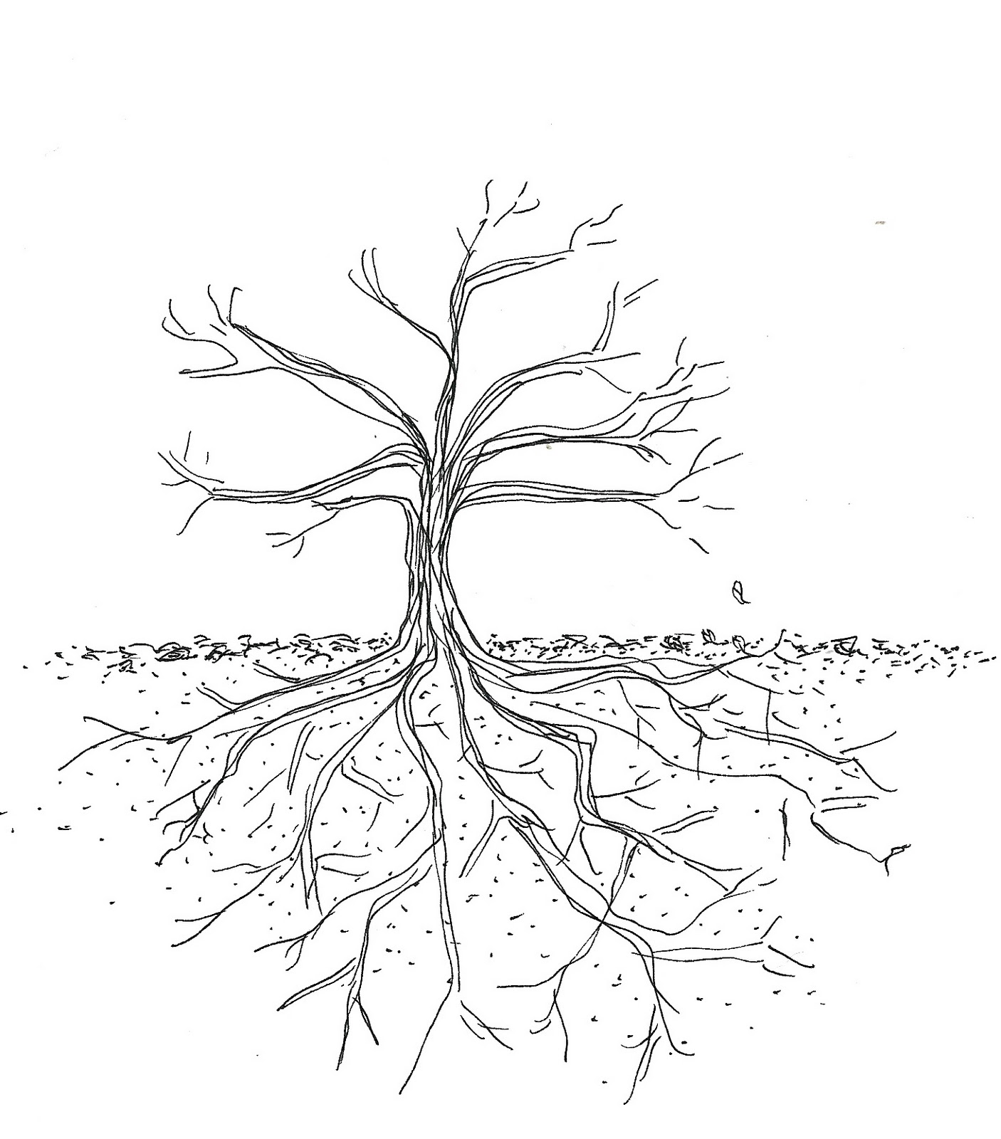 1406x1600 Tree Roots Underground Drawing