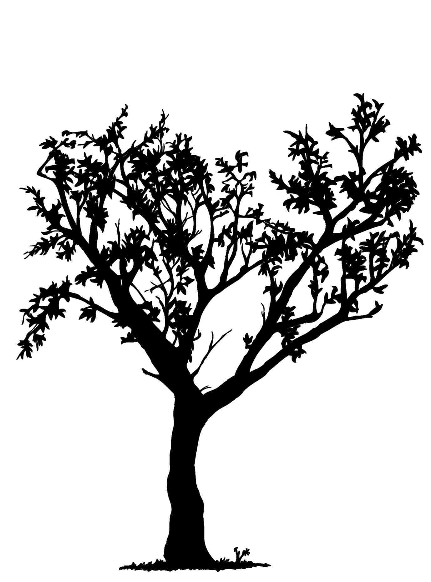 1378x1860 Tree Drawing Easy With Roots