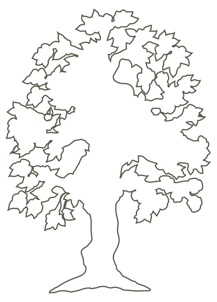 736x1023 Tree With Roots Clipart Outline