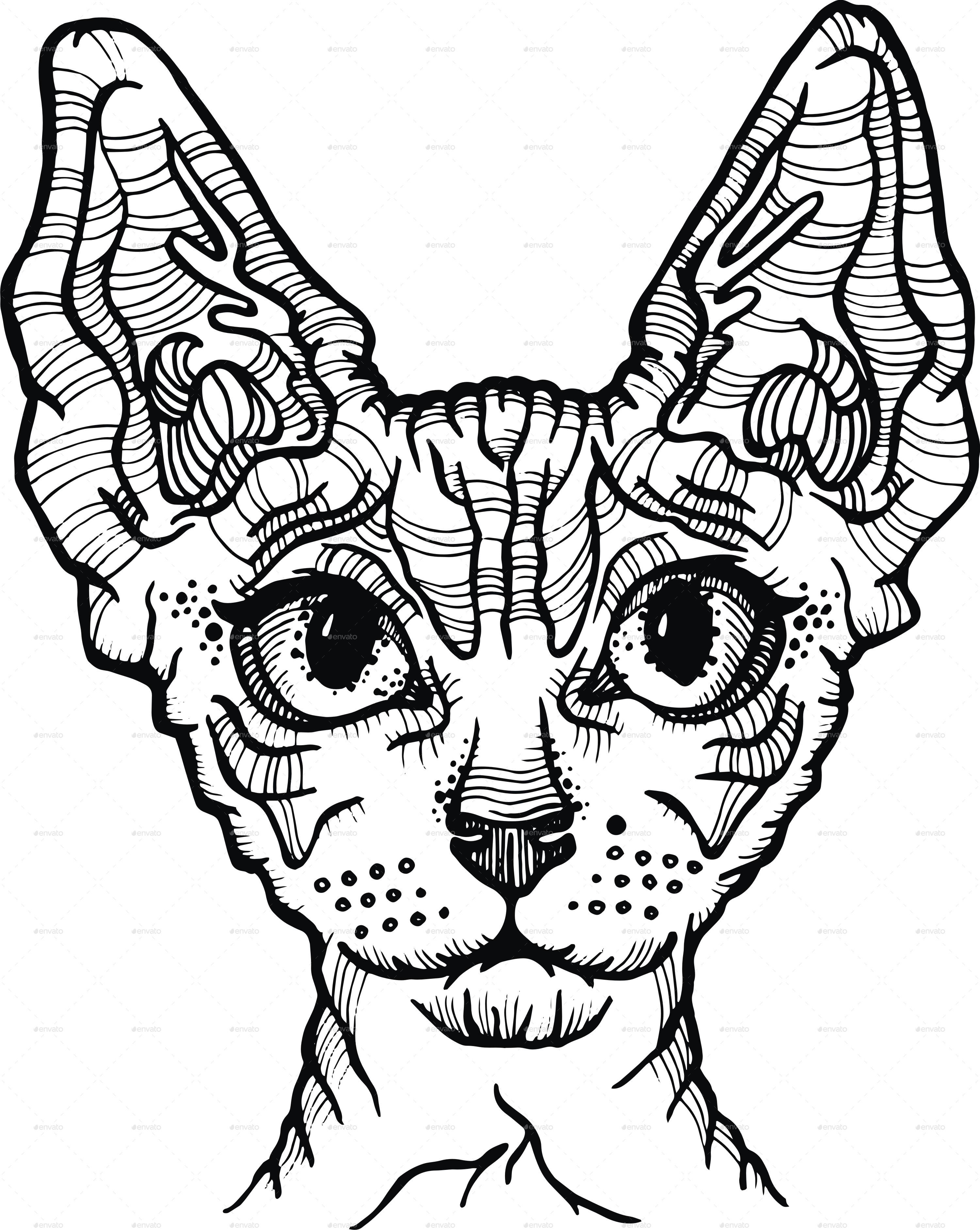 3000x3765 Sphynx Cat Vector Illustration By Pandochka Graphicriver