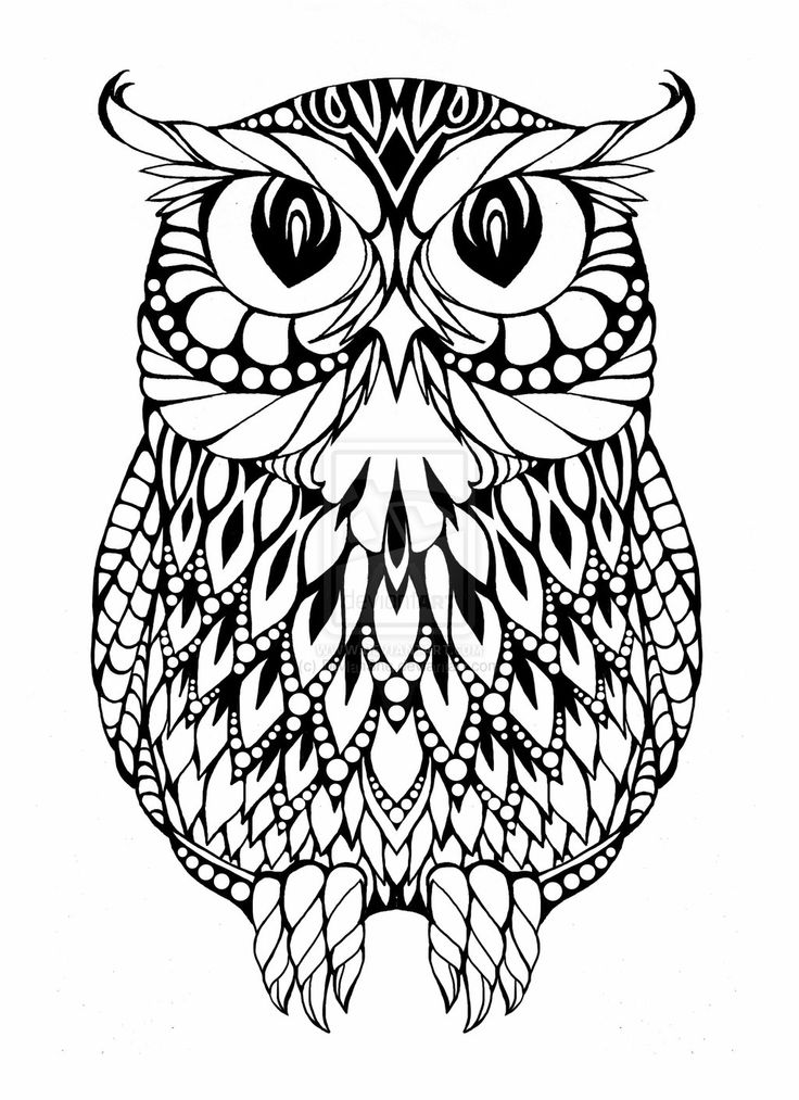 736x1013 Coloring Page Owl