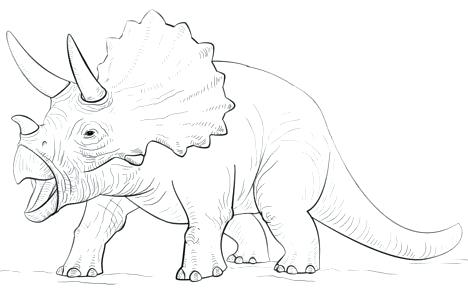 Triceratops Drawing at GetDrawings.com | Free for personal use ...