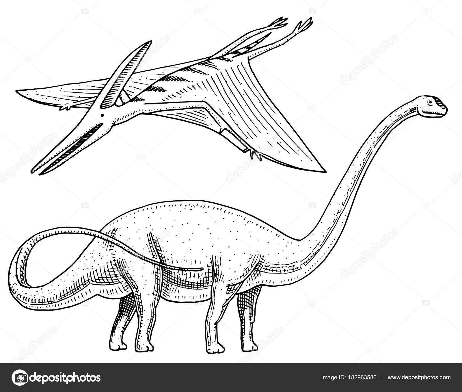 1600x1358 Dinosaur Brachiosaurus Or Sauropod, Plateosaurus, Diplodocus