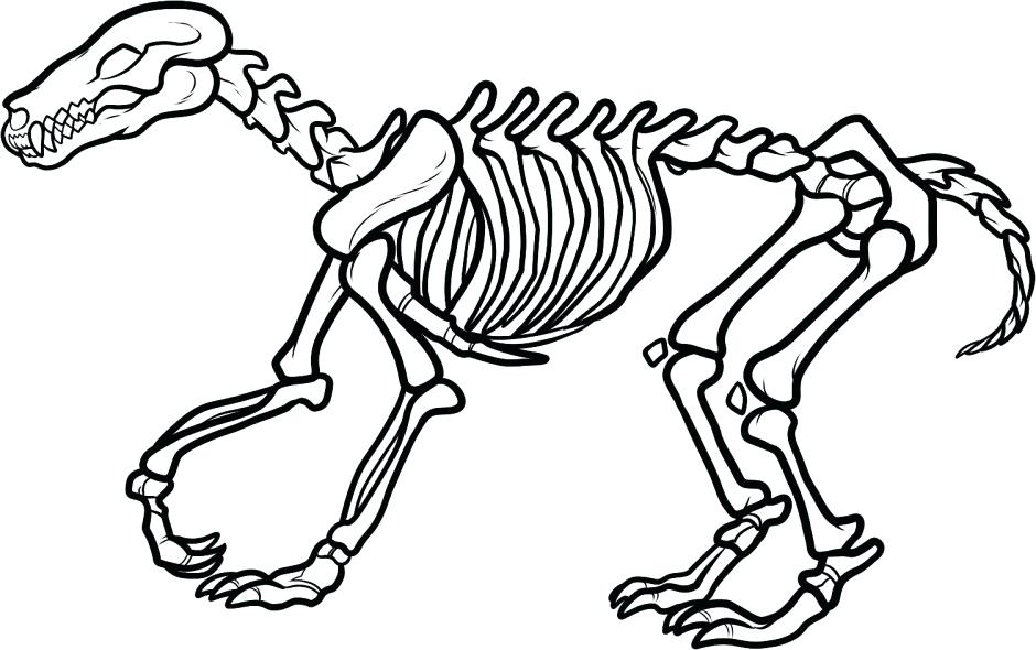 940x590 Fossil Coloring Pages Triceratops Skeleton Outline Drawing Fossil