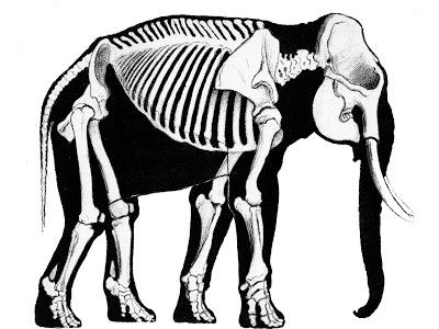 400x300 Scott Hartman's Skeletal