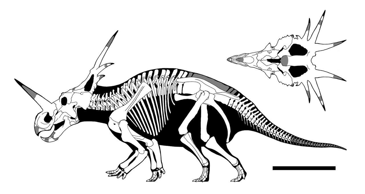 1280x680 Skeleton Drawing Favourites By Fafnirx