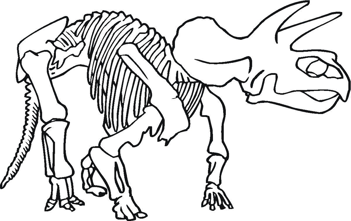 triceratops skeleton drawing at getdrawings com