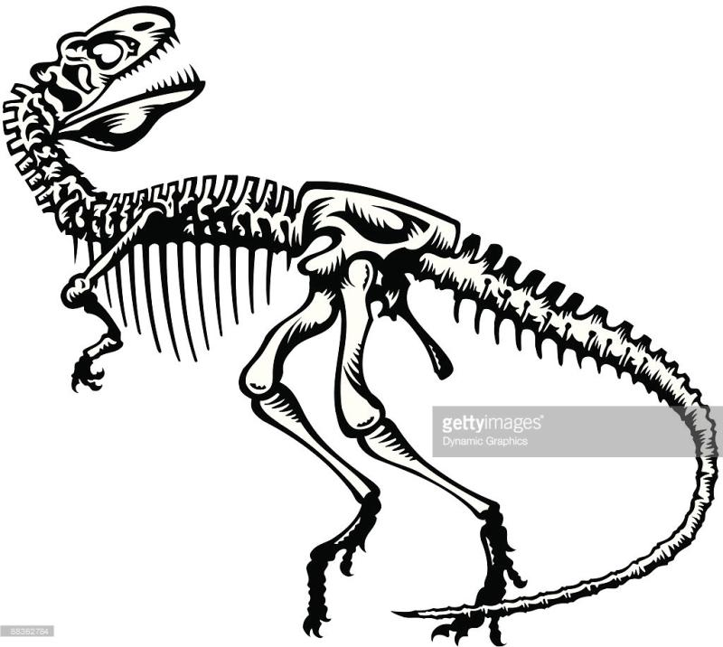 800x716 Dinosaur Skeleton Clipart