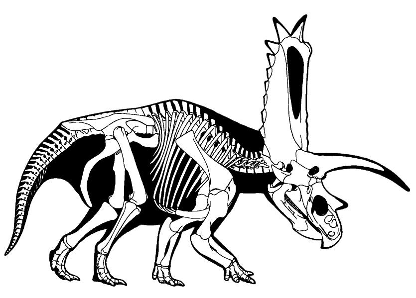 835x599 T Rex Skeleton Cakes Skeletons