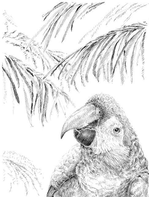 Tropical Bird Drawing