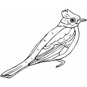 300x300 Freethe Bird Coloring Book Contains Line Drawings Of Many Common